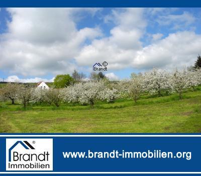 Traumgrundstück in mit Kirschbäumen, teilerschlossen, ideal für Pferdebesitzer! Bauerwartungsland!